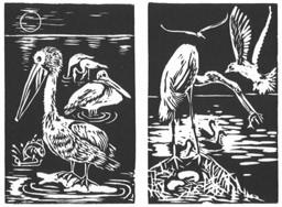 waterbirds-ii.jpg